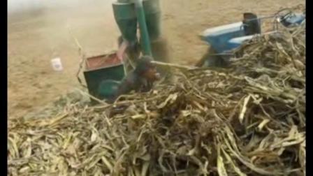 原厂,典型全自动玉米秸秆稻草粉碎机厂家