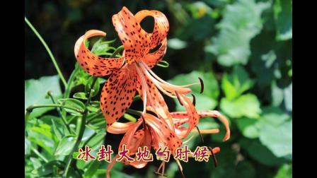 沈北新区喜洋洋广场舞《小区花园》牡丹之歌带歌词