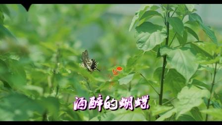 酒醉的蝴蝶(伴奏F调巴乌筒音作5)
