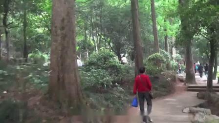 【浙江省旅游】(70)金华双龙洞