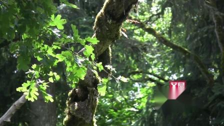 AM01418 清新唯美自然景色实拍空镜头 春天 小清新 树叶森林 夏日阳光风景LED背景高清视频素材