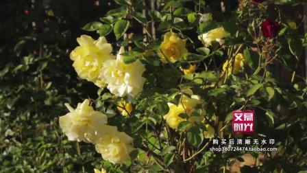 AM01459 阳光下的花朵绽放实拍空镜头 春天 小清新 树叶森林 夏日阳光风景LED背景高清视频素材