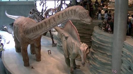 上海自然博物馆印象(上)