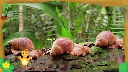 萌鸡小队趣自然:麦奇真是有趣,看见蜗牛不认识,求助哥哥姐姐.mp4