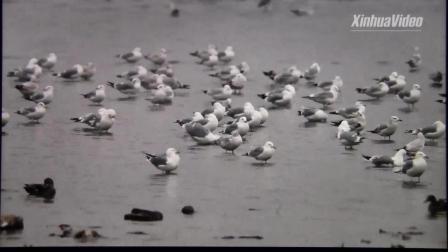新华社英文版候鸟迁徙