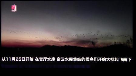 北京监测到4种鹤