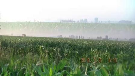 大田小麦生长茂盛丰收在望「2020.3.25」