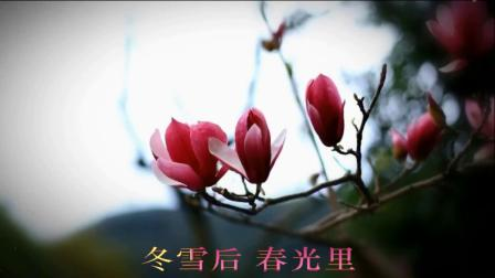 歌曲《玉兰花》-杨小曼