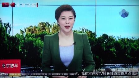 BTV新闻直播 黑豹野保站 青头潜鸭