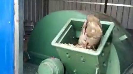 硬杂木粉碎机直径20公分枣树粉碎机
