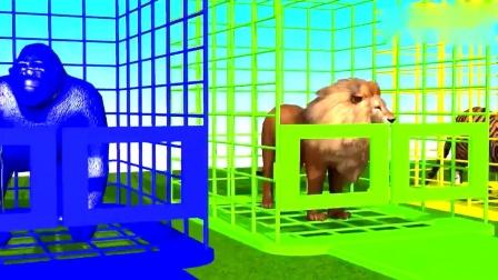 早教益智,笼子里的大猩猩狮子和老虎吃掉了不同的雪糕后变了颜色.mp4
