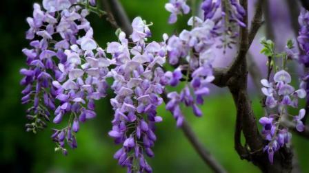 春天来了----花花世界(图片来源于中旅摄网攀枝花站CTPN)