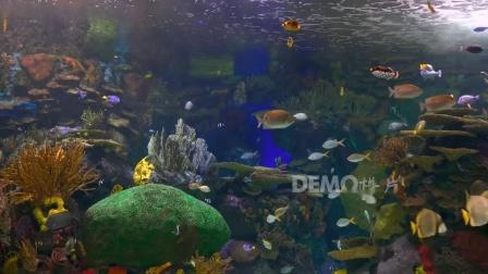 e587 2K超高清画质唯美海洋主题婚礼童话世界海洋馆水族馆海底光线荧光水母鱼群水草珊瑚海藻卡通幼儿园晚会歌舞表演节目LED大屏幕舞台背景视频素材