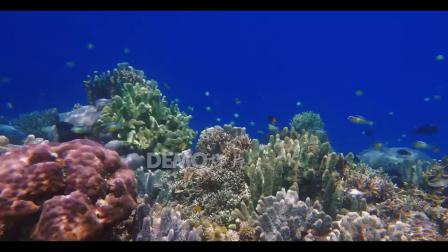 e725 唯美海洋主题婚礼童话世界海洋馆水族馆海底光线荧光水母鱼群水草珊瑚海藻卡通幼儿园晚会歌舞表演节目LED大屏幕舞台背景视频素材