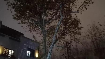 【Strawberry Alice】摩登思南季IV:奇境思南·光影之旅:思南生命之树 - 2,2019-12-17 上海思南公馆