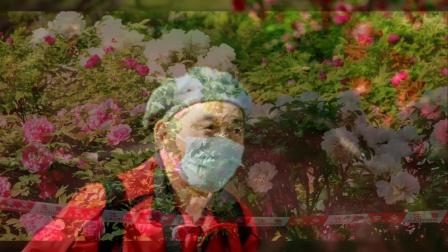 春末,寻访牡丹,在玉渊潭,2020年4月17日。