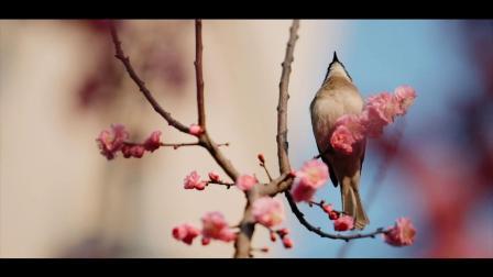 留住好春光,少女心爆棚的樱花小甜点,香脆酥软,又甜又萌又清新