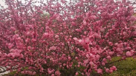 友谊广场的春景