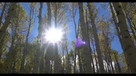 a784 2K画质超唯美原始森林白桦林树木秋天秋季蓝天白云大自然景色空镜头绿色环保歌舞节目表演大屏幕舞台LED背景视频素材