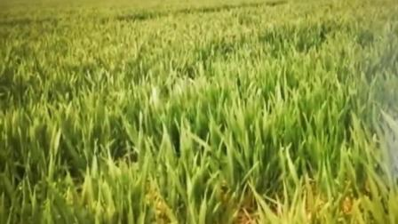 刘英华音乐作品七十.mpg