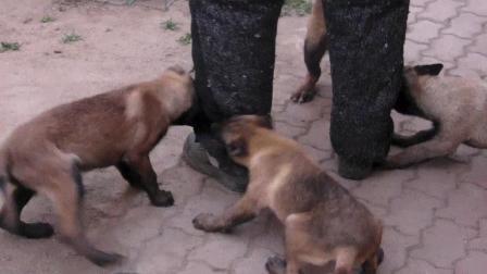 幼犬视频~1