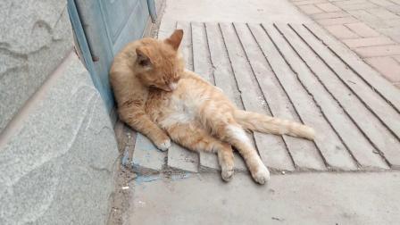 做你怀里那只猫