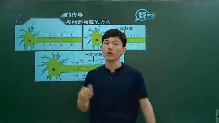 学而思高中生物_兴奋的传导与传递一轮复习视频