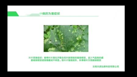 【葡萄种植】病害- 花叶病的识别与生态防控技术