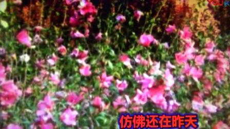 翻唱《杨白虎老师电子琴曲(好人一生平安)》此歌的作曲是雷振邦老师的女儿雷蕾、喜欢