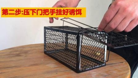 锁框式捕鼠笼使用方法