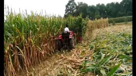 SH-180前置右倒型玉米秸秆割晒机玉米秸秆收割机工作视频