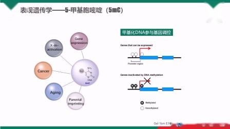 【小贝开讲】之微量DNA的5-羟甲基胞嘧啶图谱测序