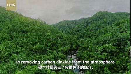 【 】5月22日是国际生物多样性日。此刻,我们的世界正面临前所未有的环境危机,许多物种濒临灭绝、全球气温持续升高。生物多样性是地球保持美丽、...