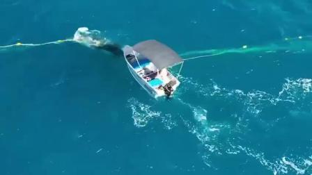 【 网友筹款帮交罚款】当地媒体报道,澳大利亚一名叫做Django的男子,此前跳进海里剪断防止鲨鱼进入海岸的渔网,解救了一头卡在网上的幼鲸。但...