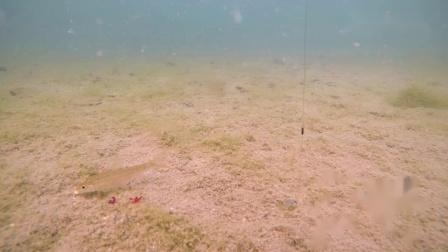 跑铅钓法,水下鱼吃钩时究竟是个什么状态?超清在线