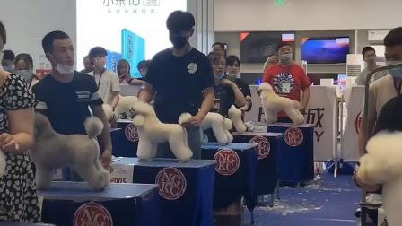 宠物美容师的证书,必须报考CNKC宠物美容师等级认证。 宠物美容师必须年满18周岁及以上者,在正规的宠物美容培训学校修完所 定课程。
