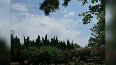 2020.5.28.蓝天白云(西柳公园)