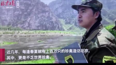 北京日报 采访黑豹野保站  保护条例