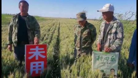 耕田乐新疆冬小麦