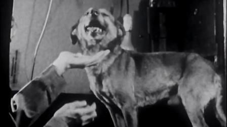 巴普洛夫的狗(1939)Experimental Neurosis In a Dog