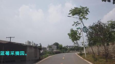 20200603浠水县散花镇郁港村蓝莓采摘园