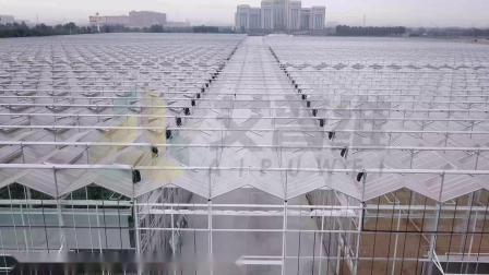 10公顷智能玻璃温室-航拍1