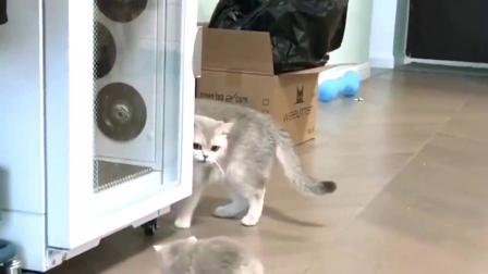萌宠:猫咪教孩子走路,可是小奶猫的四只脚各自走各自的.mp4