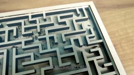 蚂蚁的方向感有多强?老外自制复杂迷宫测试,结果太意外了!