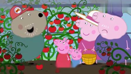 小猪佩奇:狗爷爷做了番茄色拉,还加入了罗勒叶,真是太美味了!