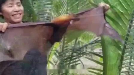 """蝙蝠被称为""""移动病毒库"""",它究竟有多毒?看完你害怕了吗"""