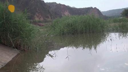 夏日雨后憩游金水河生态公园
