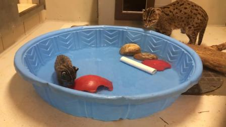 女子捡到2个小猫,养大后每天抓鱼带回家,跟踪发现惊人秘密