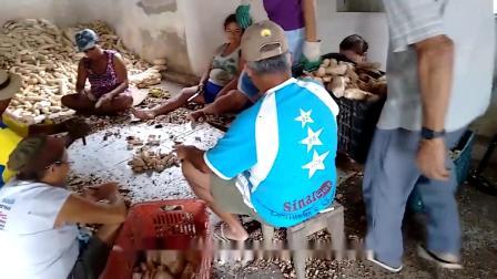 农村大叔开家庭作坊做木薯粉卖,1斤8块,城里人一次买50斤!