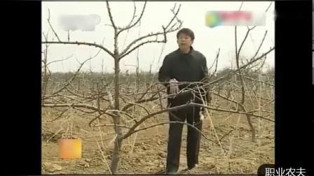 樱桃种植技术 结果期树体管理 视频-_标清.mp4